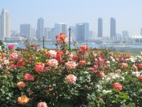 Kwiaty na tle aglomeracji